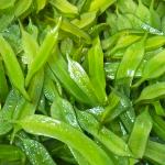 冷凍保存OK!茎わかめの佃煮の作り方【作り置き料理】Simmer wakame stalks in soy sauce